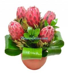 Aranjament protea